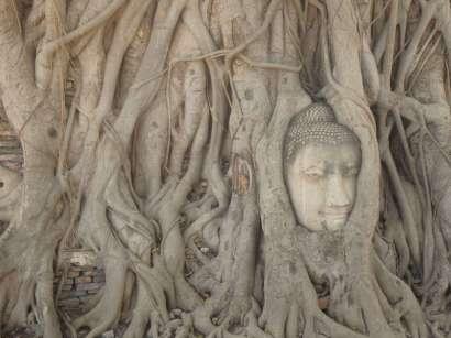 Ayutthaya - tête de buddha
