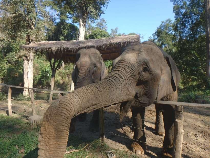 Thaïlande - Elephants