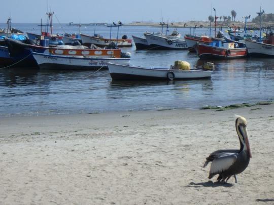 Port de Paracas, Pérou