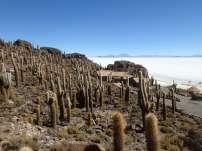 Île aux cactus, Salar d'Uyuni, Bolivie