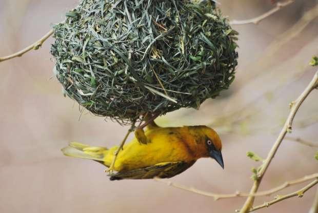 Bird, Bufflesrift Game Lodge, Oudtshoorn, Afrique du Sud