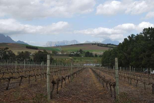 Domaine Clos Malverne, Stellenbosch, Afrique du Sud