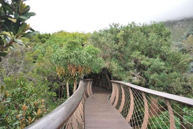 Canopy Walk, Kirstenbosch Botanical Garden, Cape Town