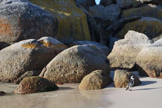 Boulders Beach, Cape Town, Afrique du Sud