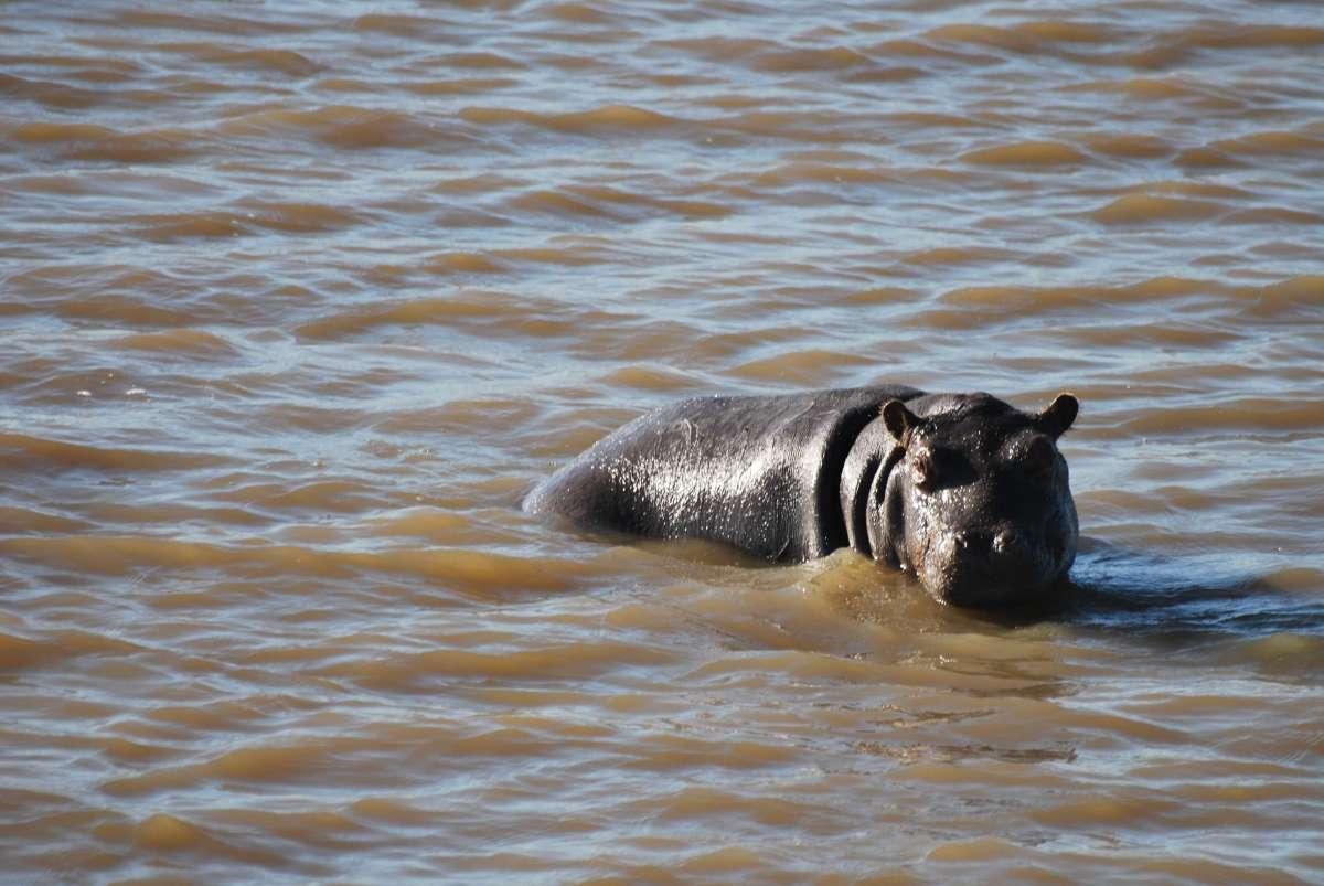 3 jours dans le KwaZulu-Natal: Sainte Lucie, iSimangaliso Wetland Park et réserve Hluhluwe-iMfolozi