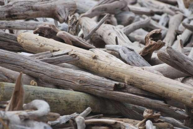 Bois flottés, Tsitsikamma National Park, Afrique du Sud