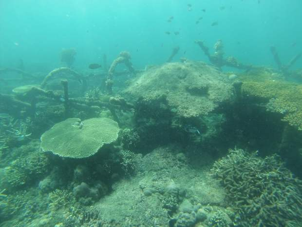 Snorkeling, Pemuteran, Indonésie