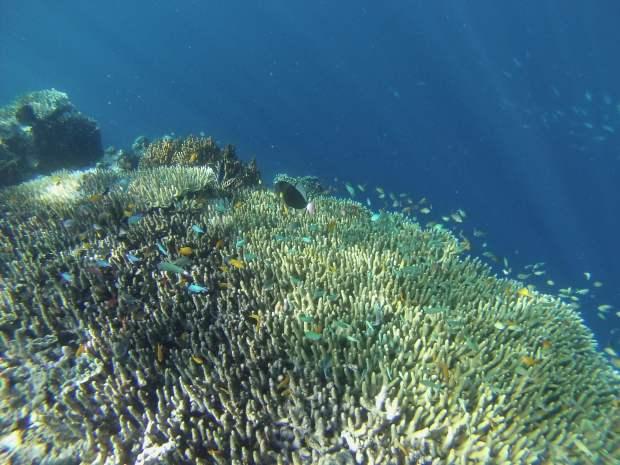 Snorkeling, Mejangan, Indonésie