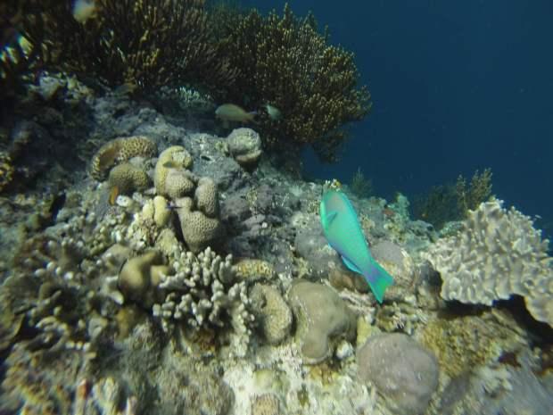 Snorkeling, Mejangan, Bali