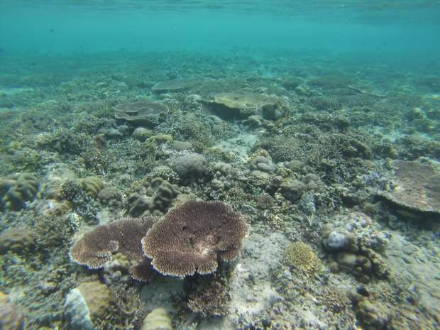Snorkeling, Mejangan, Indonesia