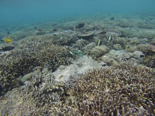 Sealife, Mejangan, Bali