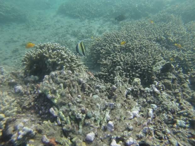Snorkeling, Amed, Bali