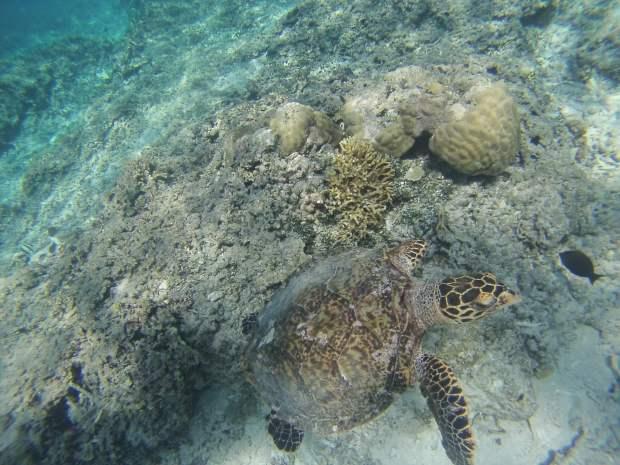 Snorkeling, Gili Meno, Indonesia