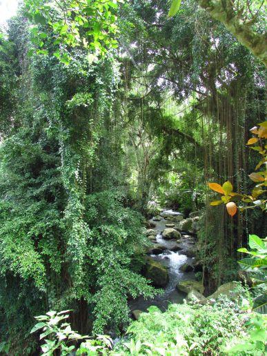 Nature, Gunung Kawi, Bali