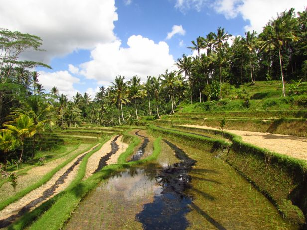 Rizières de Gunung Kawi, Bali