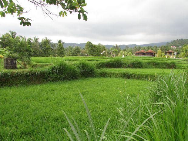 Rizières de Munduk, Bali