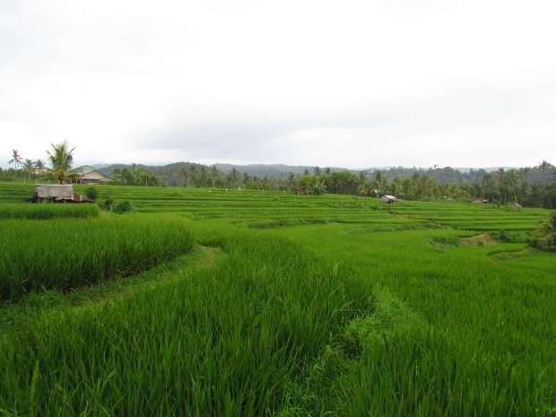 Rizières, Munduk, Bali
