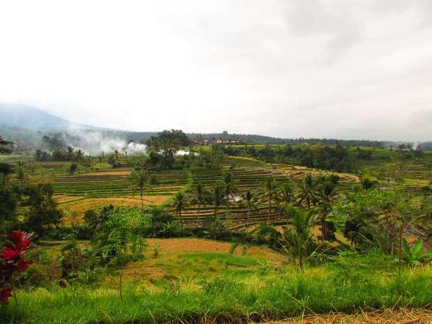 Jatiluwih terraces, Bali