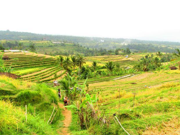 Rizières en terrasses de Jatiluwih, Bali