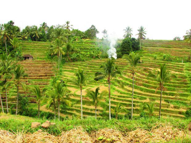 Paysages de Jatiluwih, Bali