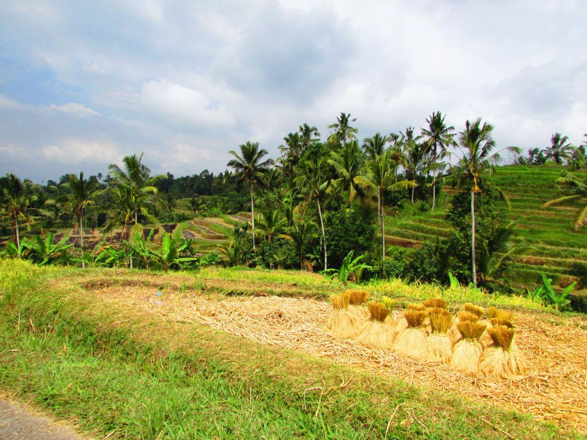 2 jours dans le Nord de Bali entre les cascades de Munduk et les rizières de Jatiluwih