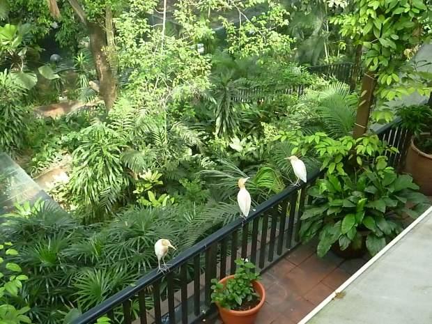 Bird Park, Kuala Lumpur, Malaisie