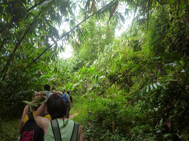 Forêt, Cameron Highlands, Malaisie