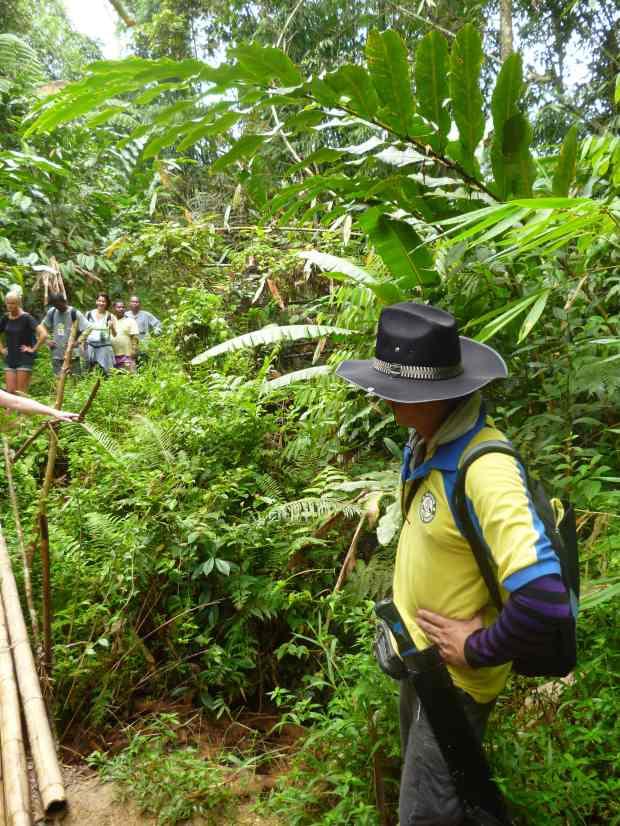 Randonnée guidée, Cameron Highlands, Malaisie