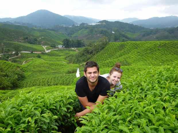 Visite des Cameron Highlands, Malaisie