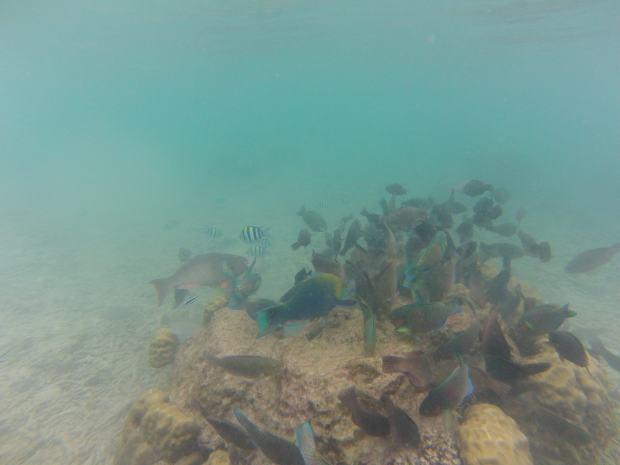 Snorkeling, Perhentian, Malaisie