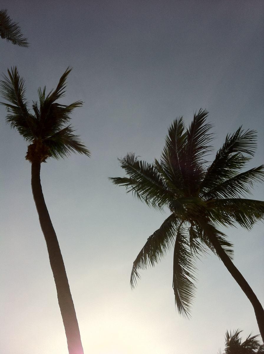 Palmtrees, Sentosa, Singapour