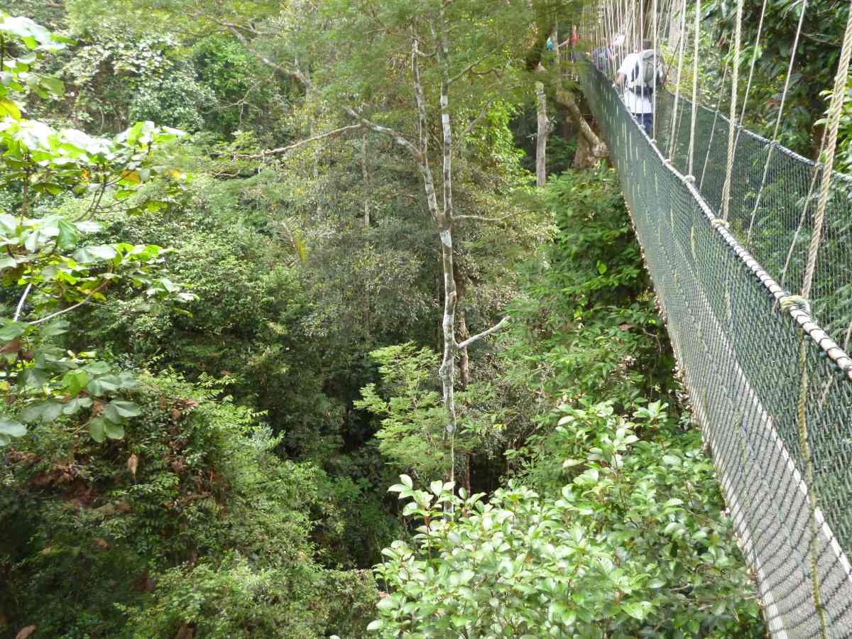 Canopy Walk, Taman Negara, Malaisie