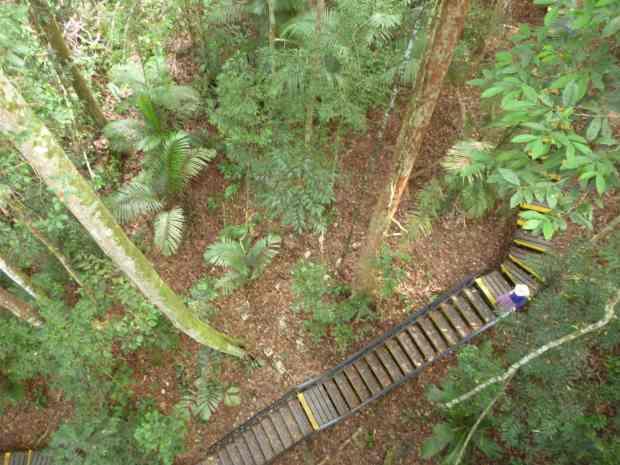 Canopée, Taman Negara, Malaisie