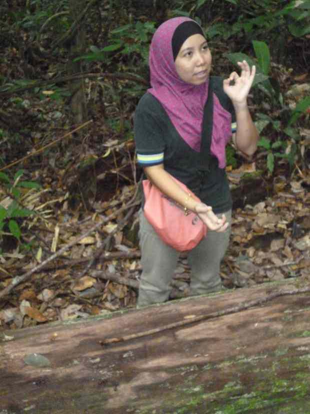 Guide, Taman Negara, Malaisie
