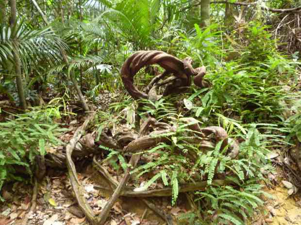 Végétation, Taman Negara, Malaisie