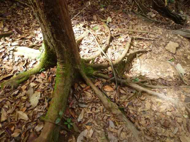 Arbre, Taman Negara, Malaisie