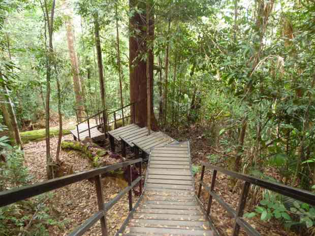 Forêt, Taman Negara, Malaisie
