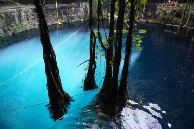 Racines géantes dans le Cenote Oxman, Valladolid, Mexique