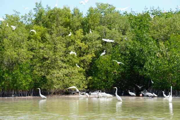 Oiseaux, Rio Lagartos, Mexique
