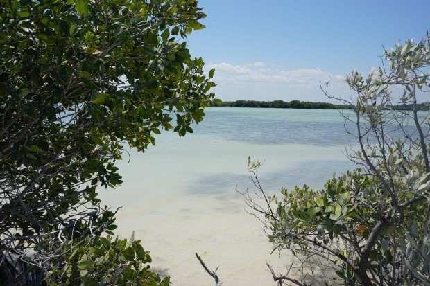 Lagune, Rio Lagartos, Mexique