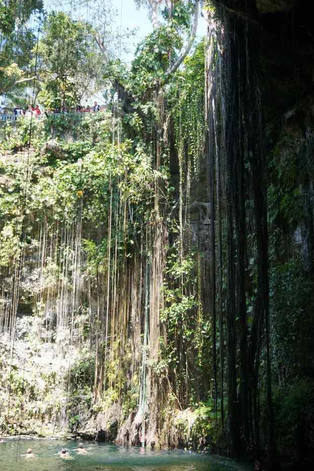 Végétation du Cenote Ik Kil, Mexique