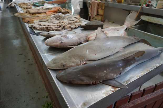 Stand de poissons au marché de Campeche, Mexique