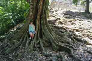 Arbre à racines, Yaxchilan, Mexique