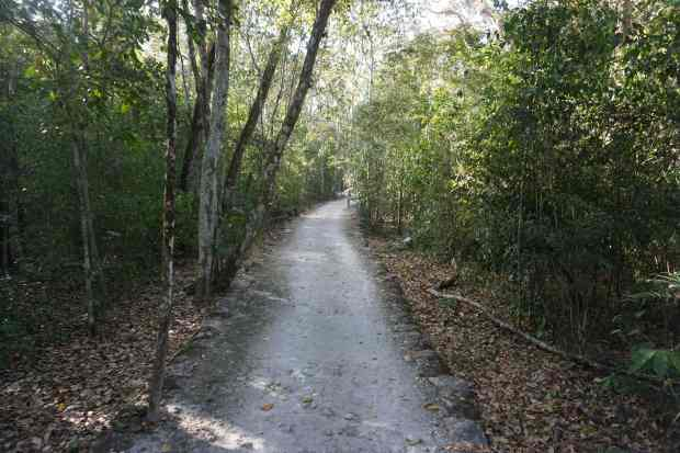 Chemin, Calakmul, Mexique