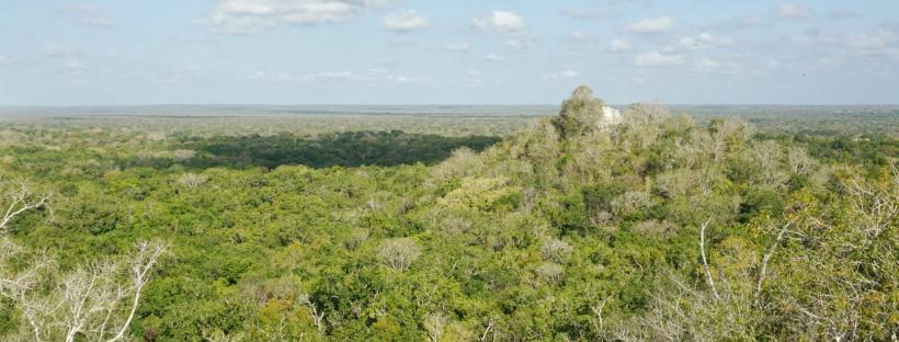 Visite du site archéologique de Calakmul, Mexique