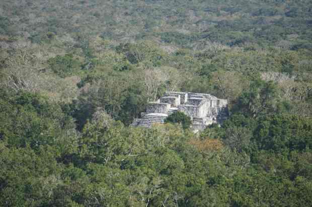 Point de vue, Calakmul, Mexique