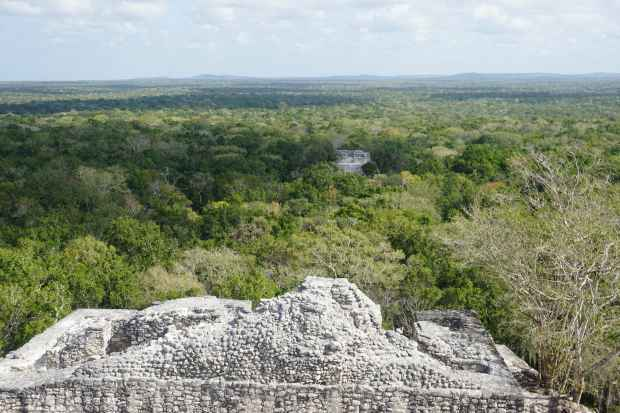 Vue panoramique, Calakmul, Mexique