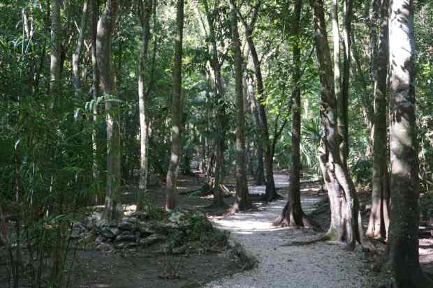 Chemin de forêt, Muyil, Mexique