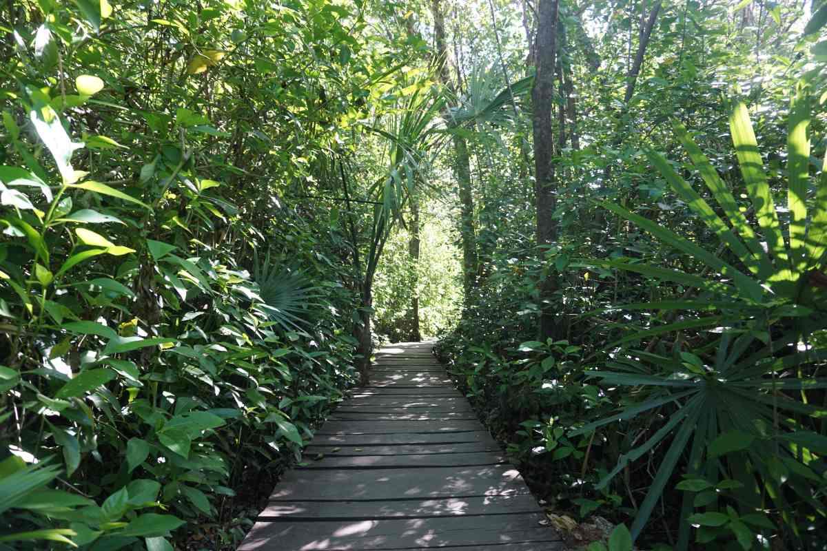 Chemin en bois, Sian Ka'an, Mexique