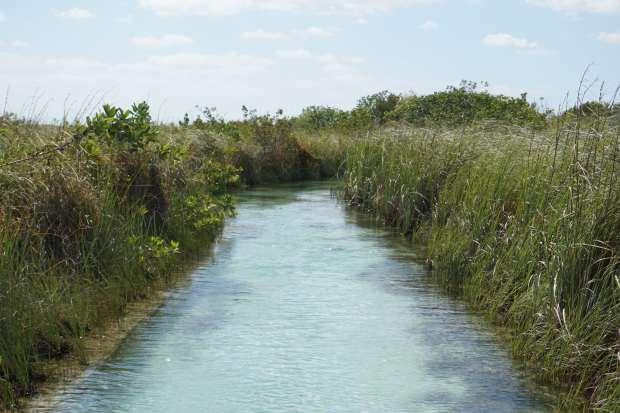 Mangrove de Sian Ka'an, Mexique